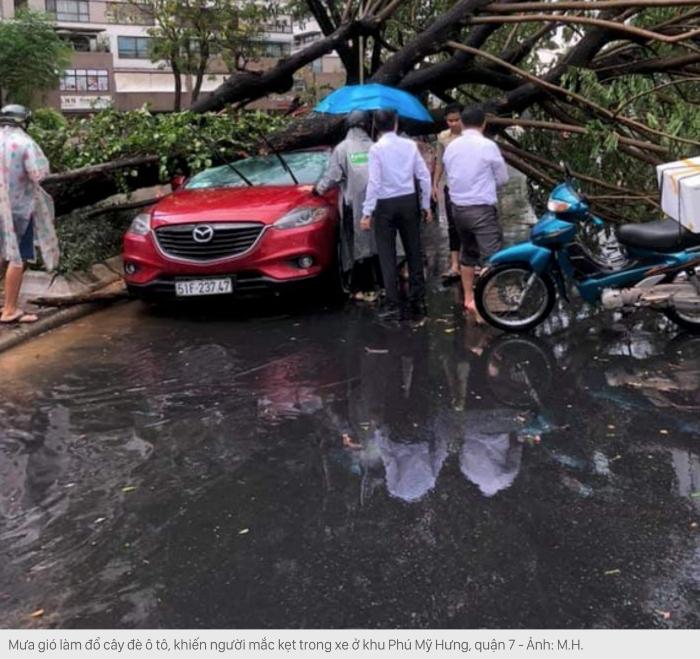 Mưa lớn, cây xanh bật gốc đè hai người ở trung tâm Sài Gòn